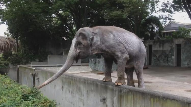 article-elephant-3-0525