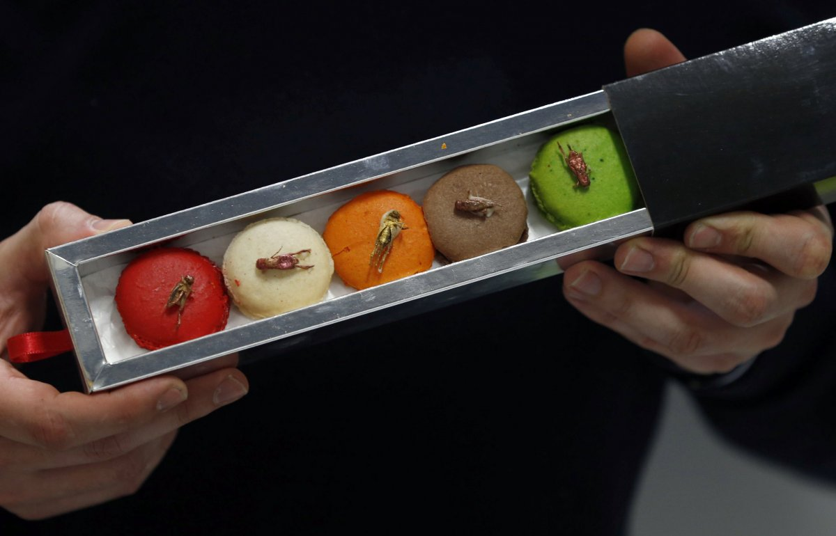 micronutris-the-only-firm-in-europe-that-raises-insects-specifically-for-consumption-made-a-batch-of-macaroons-garnished-with-dehydrated-insects