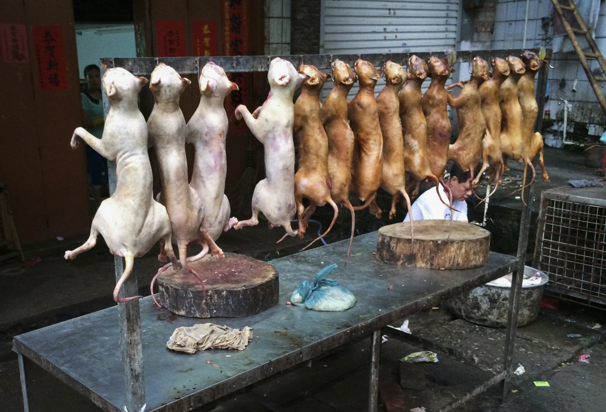 the-extremely-controversial-annual-dog-meat-festival-held-in-yulin-guangxi-zhuang-in-china--where-festival-attendees-dine-on-dog-meat--is-currently-being-protested-by-animal-activists-across-the-world
