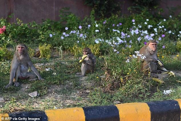 Opice pri jedení dodržiavajú sociálny odstup