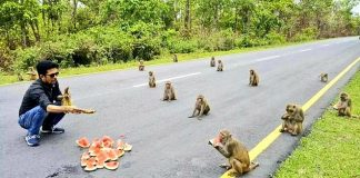 Opice v Indii dodržiavajú sociálny odstup
