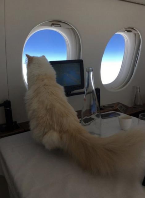 Mačka Choupette Lagerfeld počas letu v súkromnom lietadle