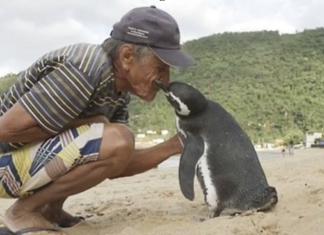 Puto medzi zvieraťom a človekom